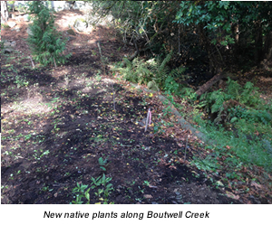 New native plants along Boutwell Creek