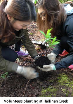Volunteers planting at Hallinan Creek