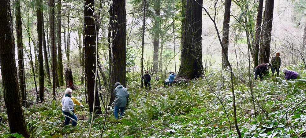 Friends of Iron Mountain, clearing tree-choking ivy