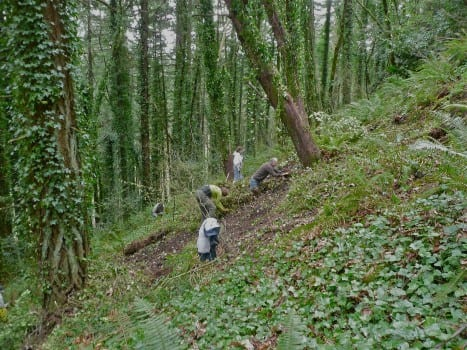 Friends of Iron Mountain Clearing Ivy