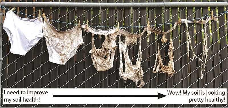Soil Health demo using undies