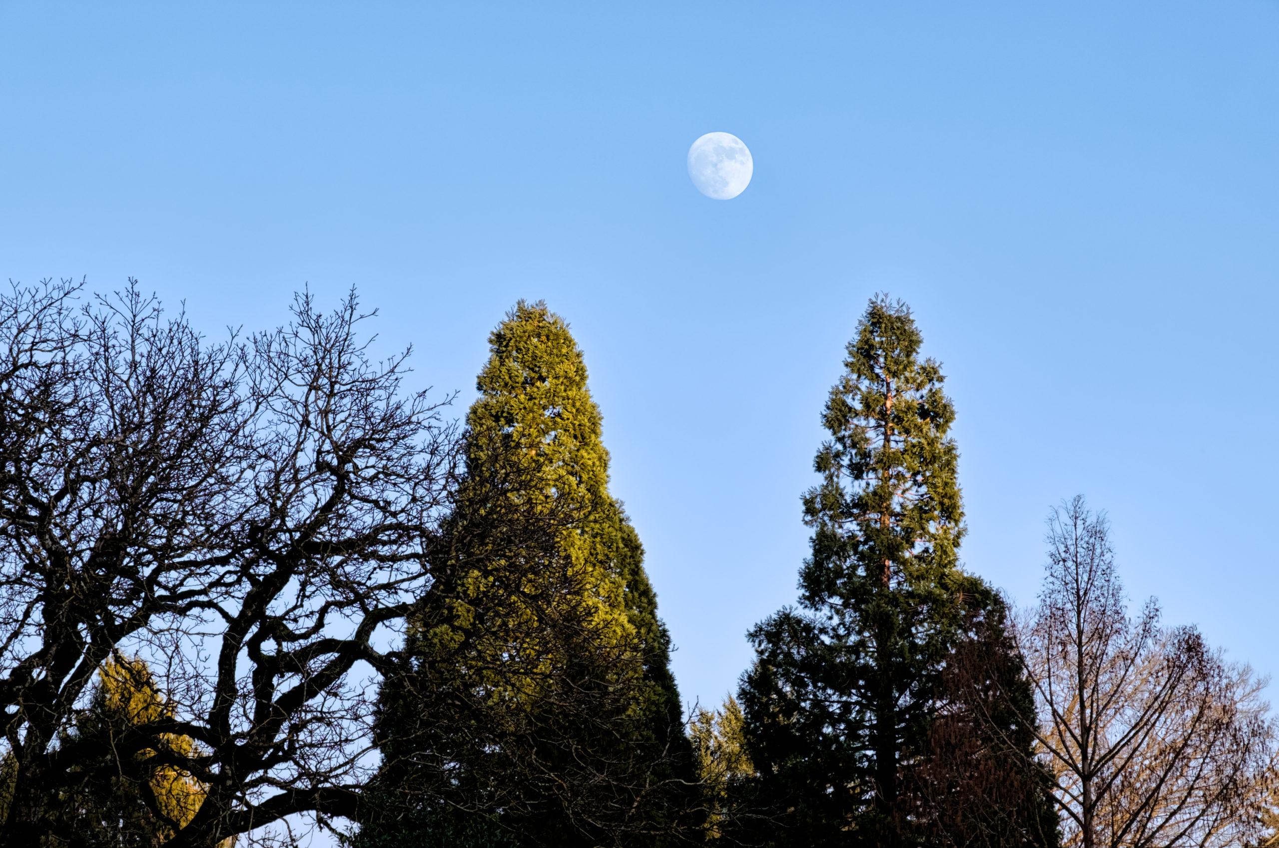 Waxing To Wolf Moon