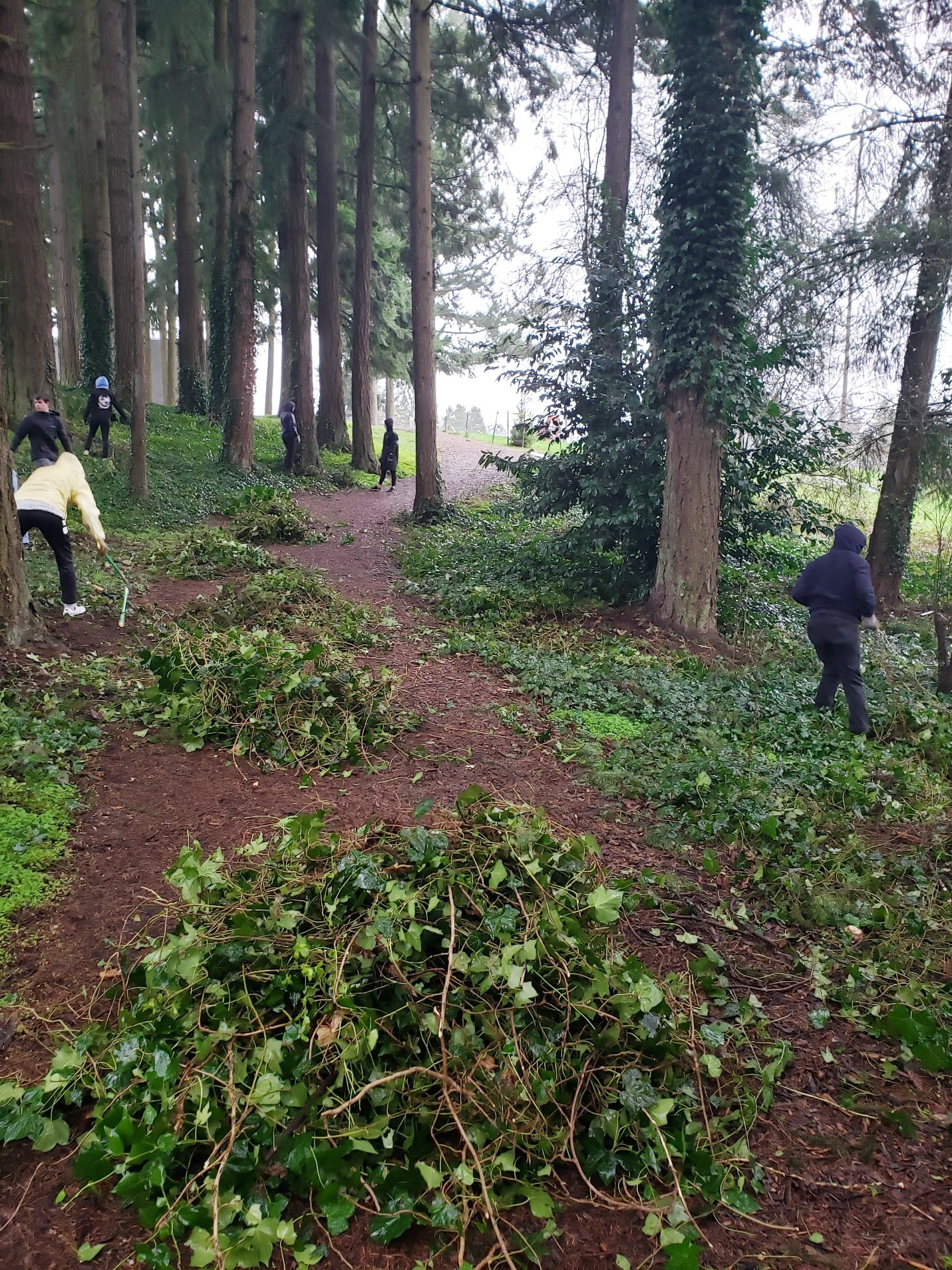 Volunteers clearing ivy from trees